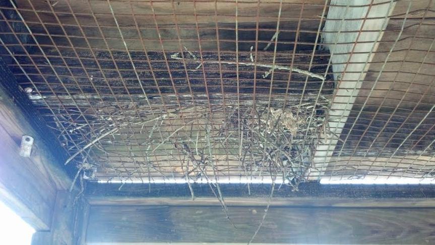 birds nest deceased bird