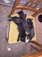 7.24 3 kittens