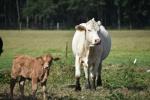 10.09.17 cows 046