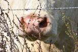 10.09.17 cows 070