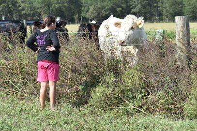10.09.17 cows 081