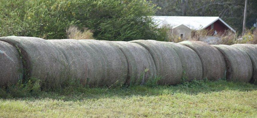 10.09.17 cows 089