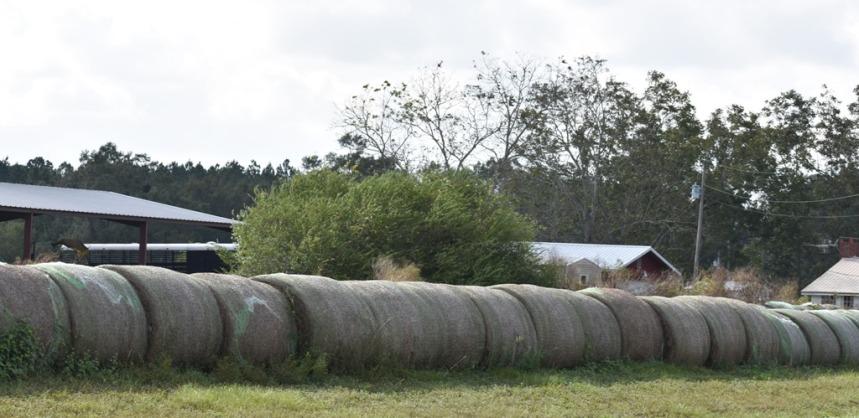 10.09.17 cows 090