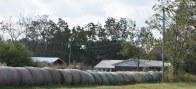 10.09.17 cows 091