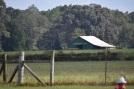 10.09.17 cows 097