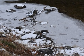 December 2017 Virginia Pigeon Forge Animals 125