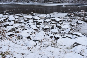 December 2017 Virginia Pigeon Forge Animals 127