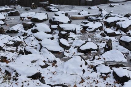 December 2017 Virginia Pigeon Forge Animals 128