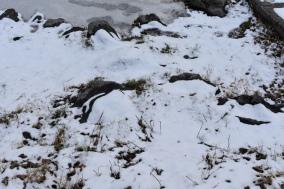 December 2017 Virginia Pigeon Forge Animals 151