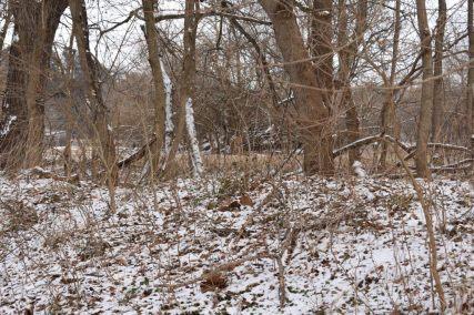 December 2017 Virginia Pigeon Forge Animals 157