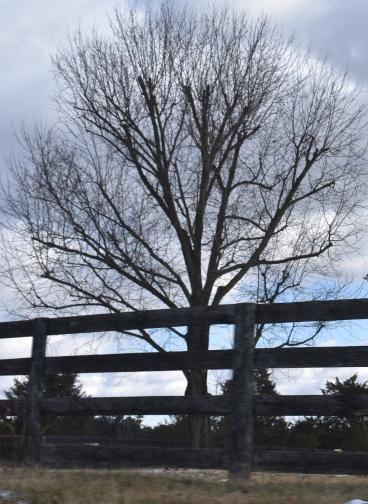 December 2017 Virginia Pigeon Forge Animals 363
