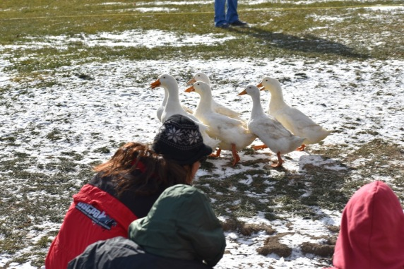 December 2017 Virginia Pigeon Forge Animals 645